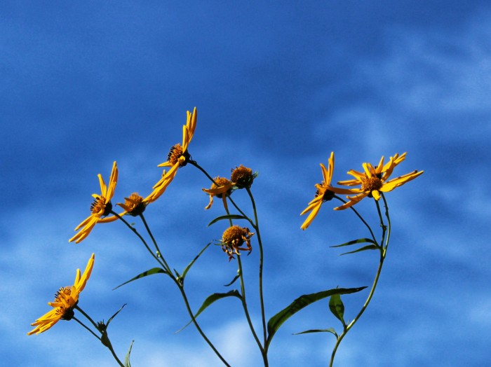 Reaching for the light by Mike Carey