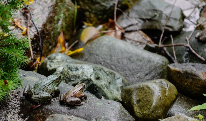 Frog Watching by Dan Bruell