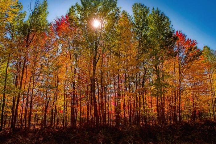 Sunlight through the autumn trees by TP Mann