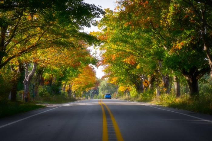 Tunnel of Trees by Mark Smith